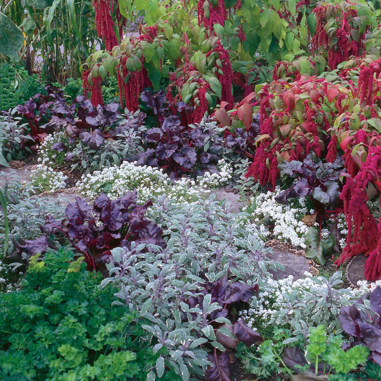 Tendances-2016-plante-facile-projet-jardinage-kit-jardin