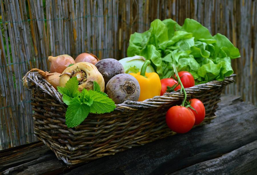 agriculture-urbaine-panier-bio