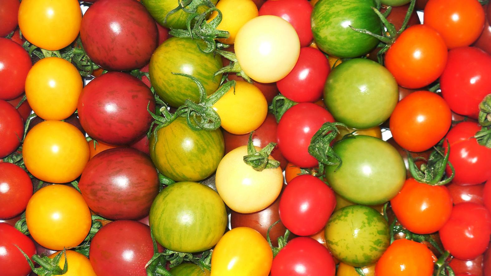 potager-agriculture-urbaine-vente-horti-media