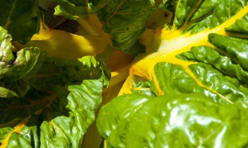 Les plus décoratifs des légumes: les bettes à carde
