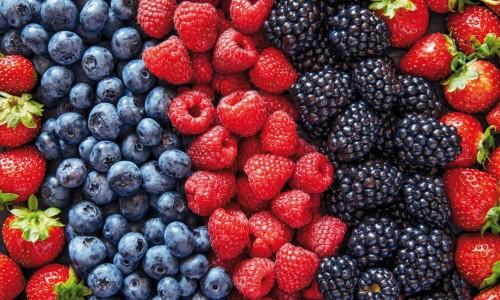 Agriculture urbaine : les fruitiers aussi