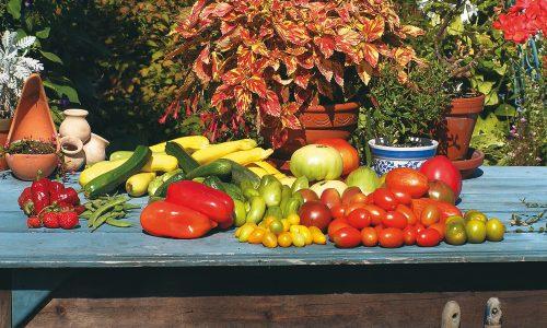 La récompense des jardiniers: les récoltes