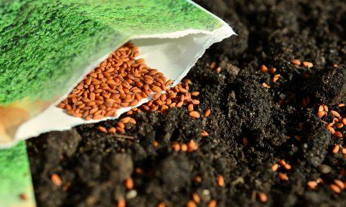 Tout commence par les semences!