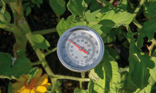 Température du sol et acclimatation : une combinaison gagnante