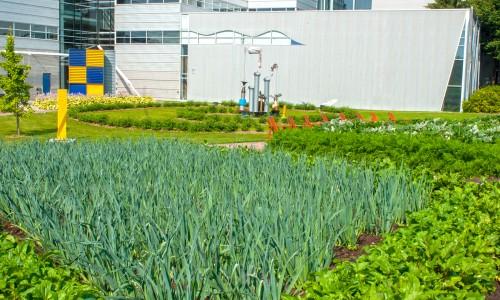 L'agriculture urbaine n'est pas un loisir!