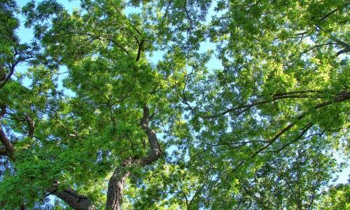 Les arbres, des alliés indispensables