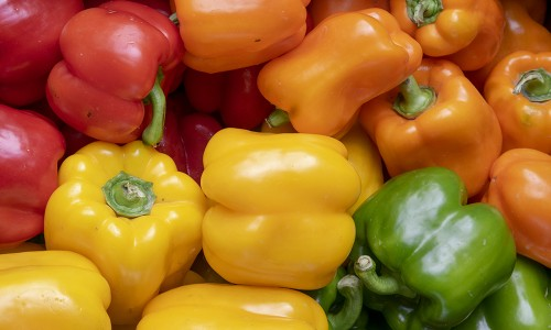 Une agriculture de proximité contre le réchauffement climatique